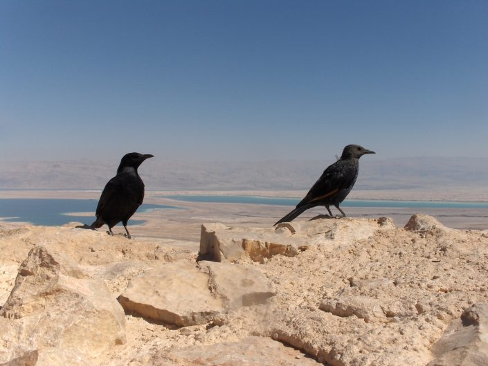 Two birds at the Masada castle with the dead sea in the bottom.