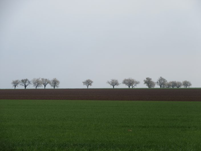 Row of trees in the far end of flat field in a random stop at Czech Republic. Green grass, brown ground, and blue-ish sky with 16 trees. Minimalism in the nature.