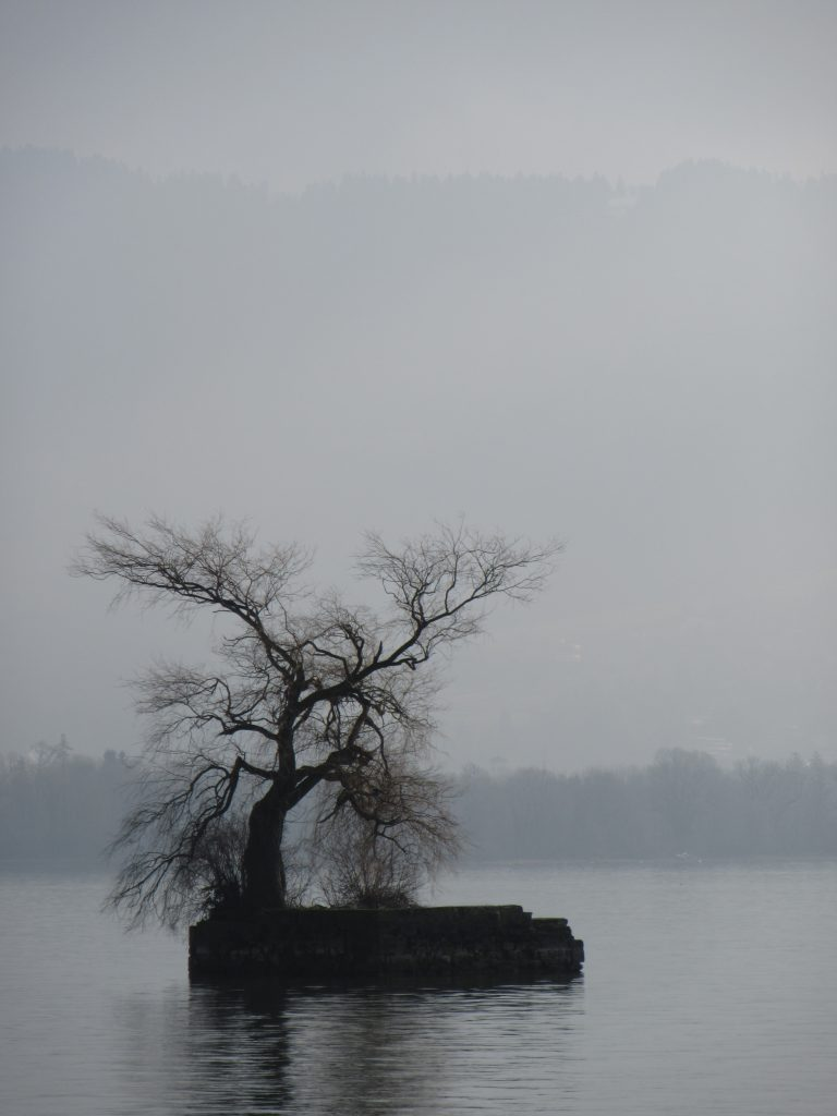 Sole tree island at Lindau, Bodensee Lake, Germany
