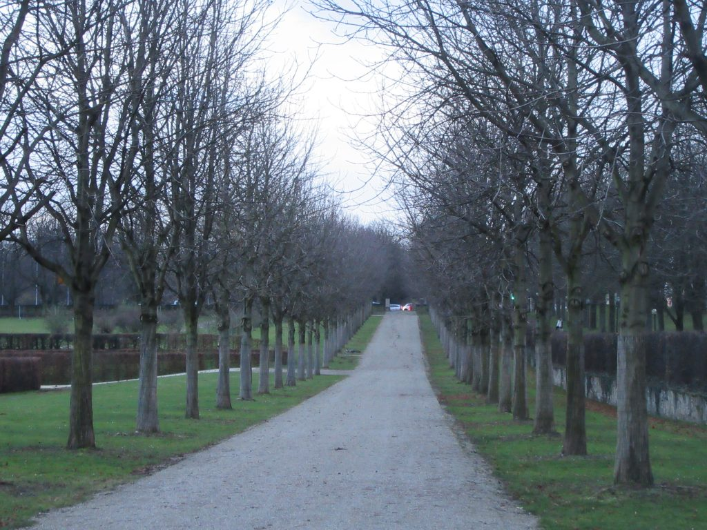 Alley of trees in Ludwigsburg palace
