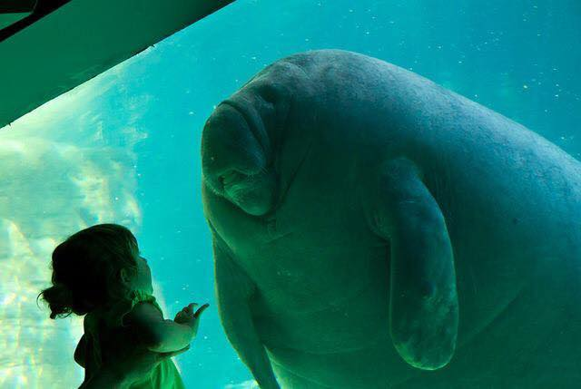 Christopher Wright photo of a little girl and a giant seal in the aquarium looking at each other through the window
