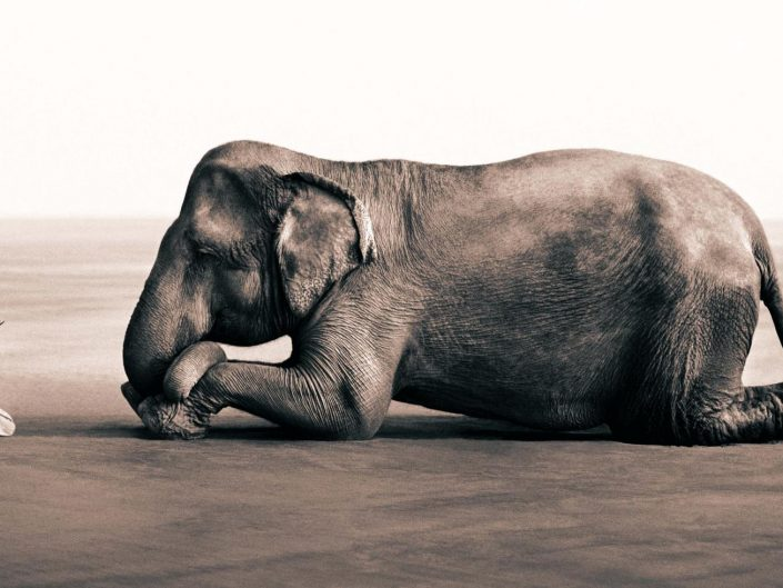 Gregory Colbert shot of a boy kneeling in front of an elephant, which is also lying on the ground. A boy reads a book.