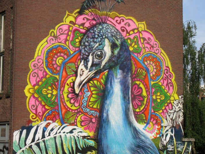Street art drawing of huge Beauty of Peacock in Eindhoven