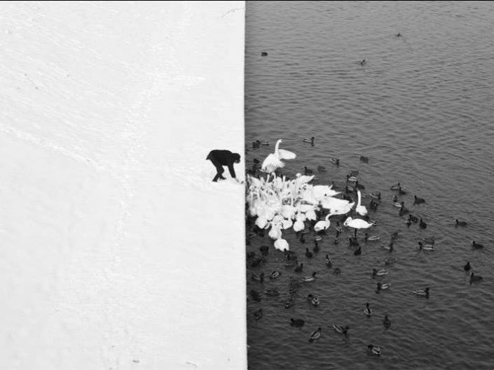 Marcin Ryczek Areal photo of snowy ground on the left, dark water on the right and man feeding white swans and dark ducks in the water. Epic