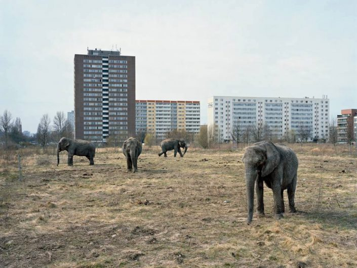 Mitch Epstein photo of elephants on the field with soviet union architecture buildings in the back and cold color environment