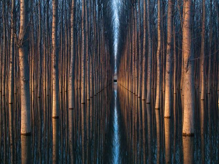 Oliver Delgado geometrically perfect photo of alley of trees and their horizontal perfect water mirror reflection