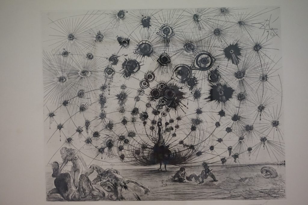 Peacock - Pencil Drawing by Salvador Dali
