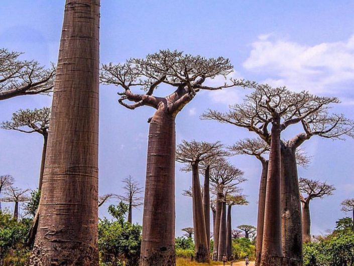 """Luke Wait photo of a """"street"""" in Madagascar. Gravel road, African kid scrolling by and huge baobabs growing on the sides."""