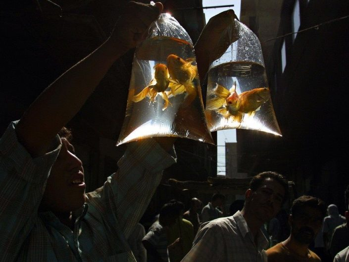 work by unknown photographer - golden fishes in water bags held up in the air
