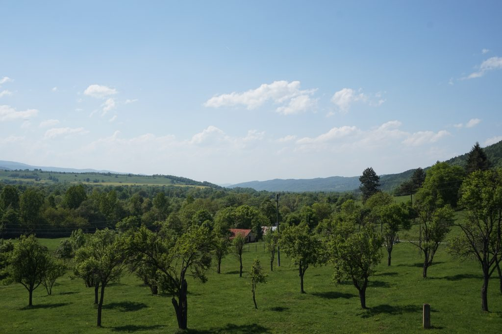 Plain of green trees in a green valley