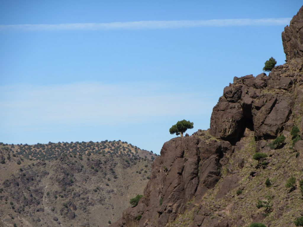 Lone tree on the sharp edge of a mountain on the route to Jbel Toubkal, Morocco