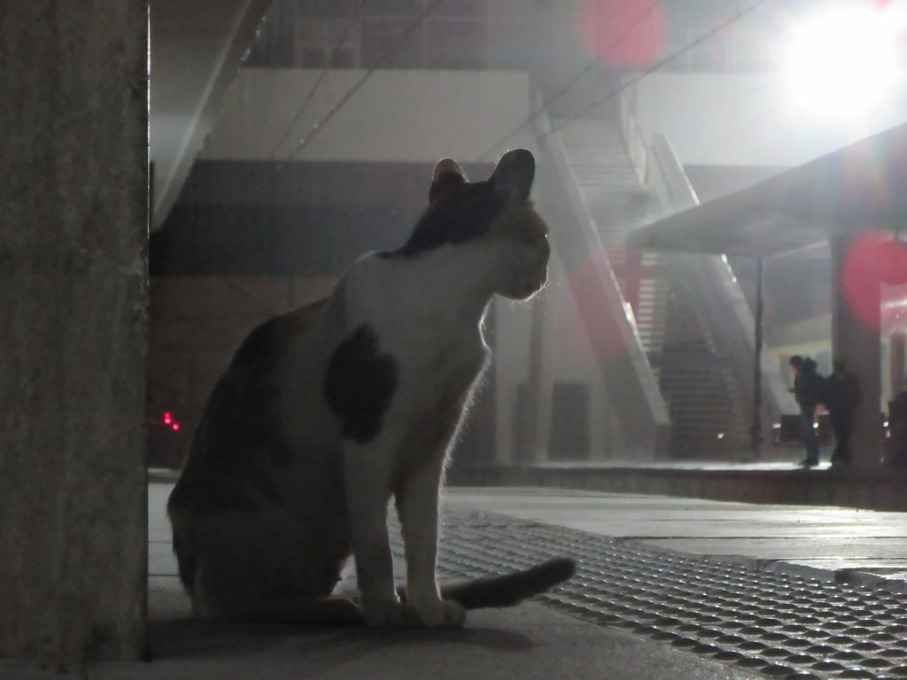 Lone Cat in Casablanca train station platform