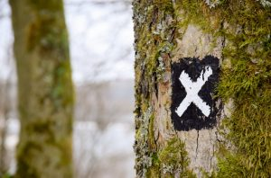 X drawn on tree trunk