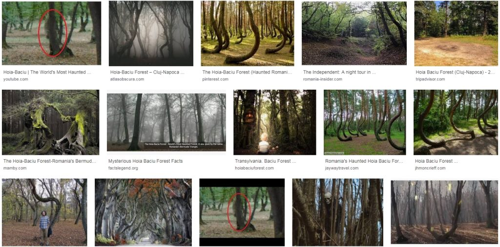 Hoia Baciu Forest google images Romania haunted forest