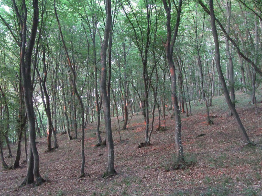 Romanian Hoia - Baciu Forest reality 2019 July